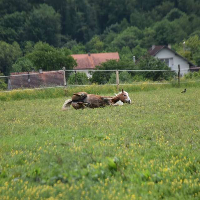 Horse and relaxation