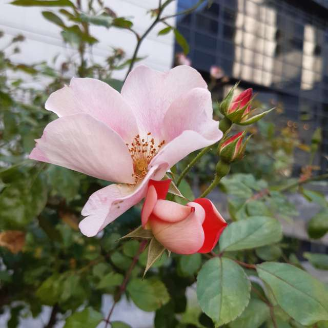 Fleur Paris