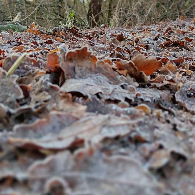 Frozen leaves, Manchester
