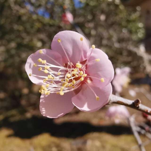 春ですね😊