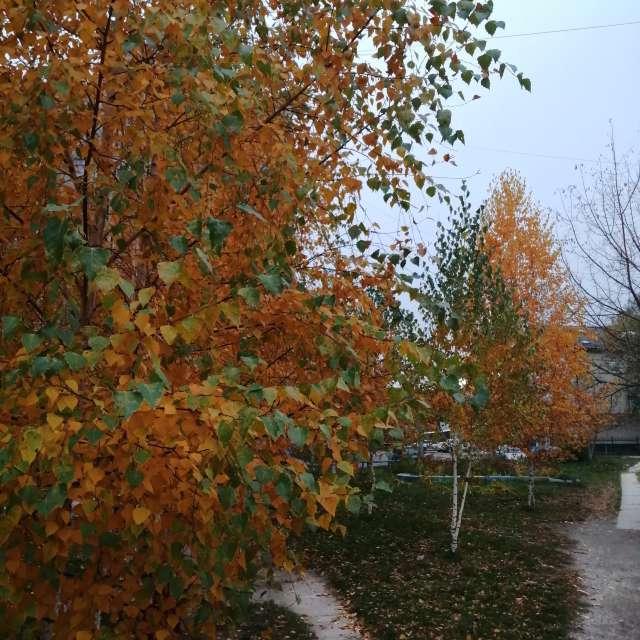Pflanze Anlage. Wettervorhersagen mit schönen Fotos von Inna_Bezrukova Fotos Welt