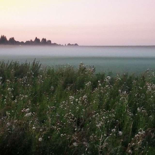 Утреннее поле
