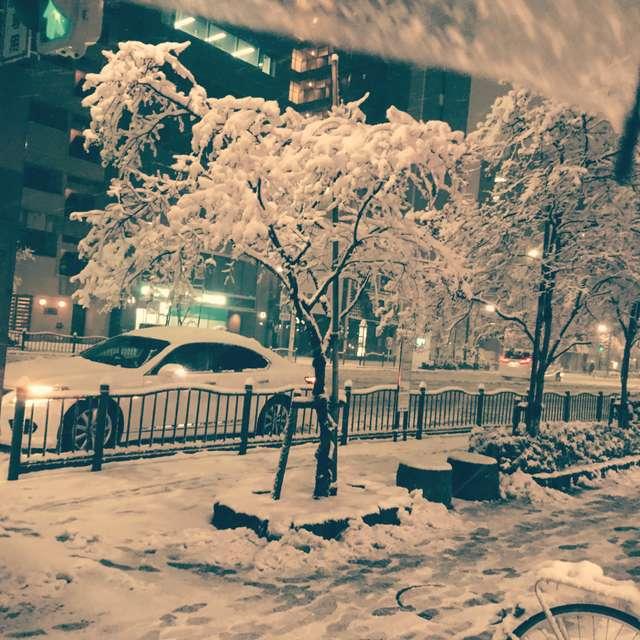 snow TOKYO