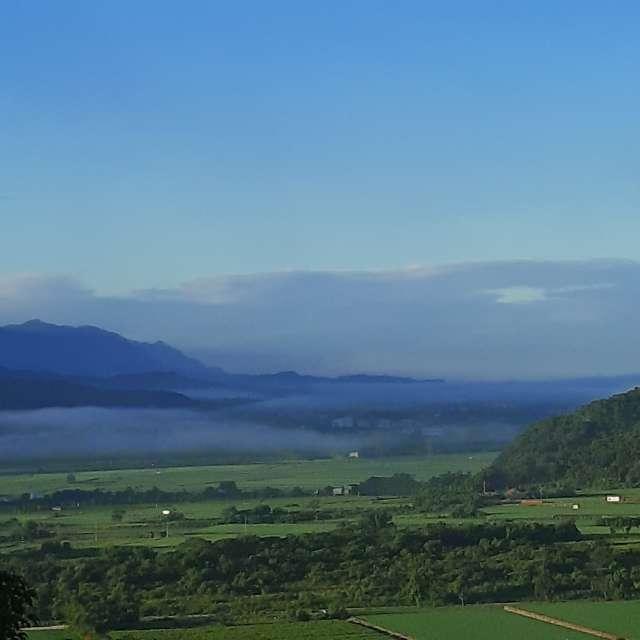 薄霧遮蔽不了綠色園區