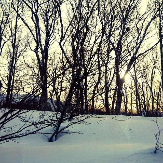 真冬の木立