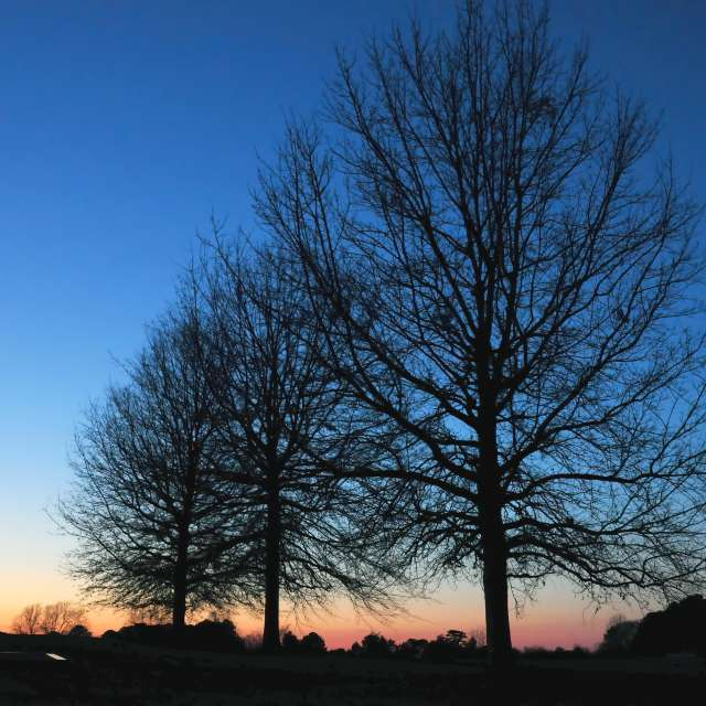 Afterglow with Trees