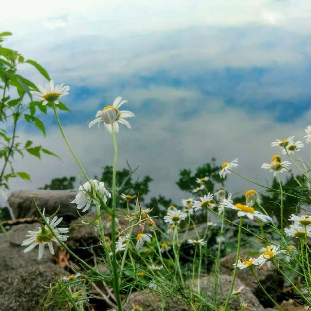Look in lake
