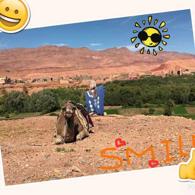 モロッコ ラクダが丁度笑っているかのように撮れたので。