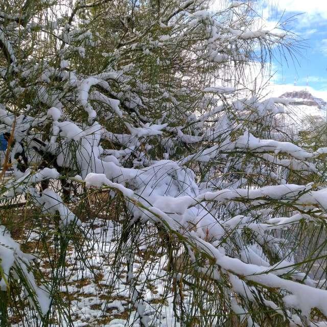 Día nevado en chihuahua