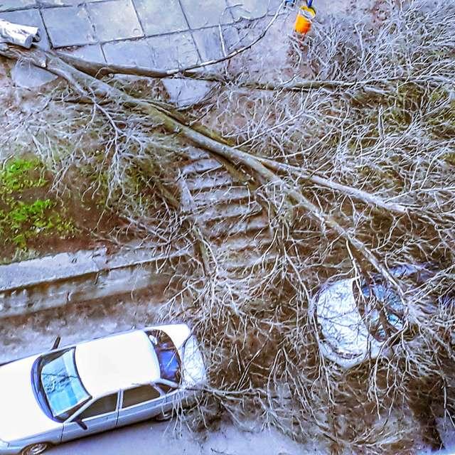 Ветер дерево свалил!
