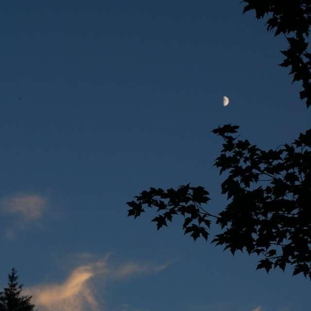 The moon sunset