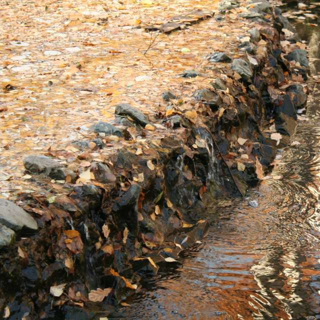 Fallen leaves in the water