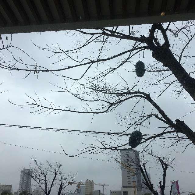 Đà Nẵng buồn ngày mưa