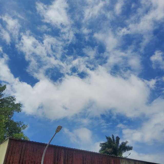 樹梢白雲互映專注藍天