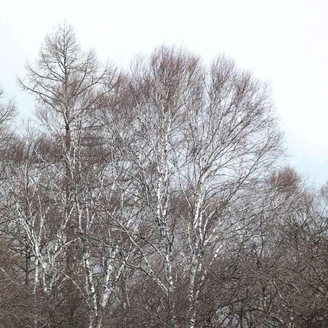 吹雪の高原