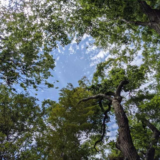 森 木々 空