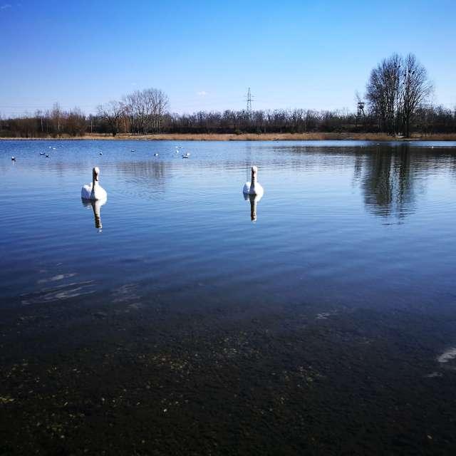 Zabrze. Jezioro