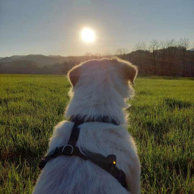 Il sole bacia i belli