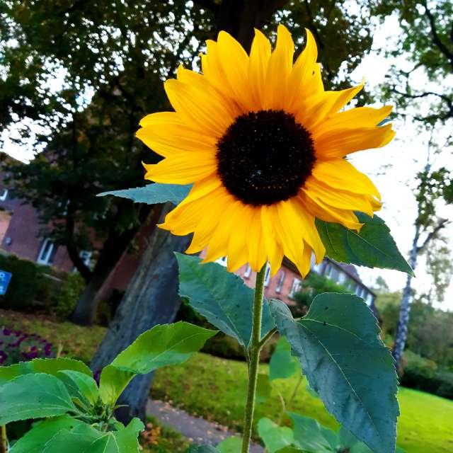 Pflanze Anlage. Wettervorhersagen mit schönen Fotos von Kthepisces Fotos Welt