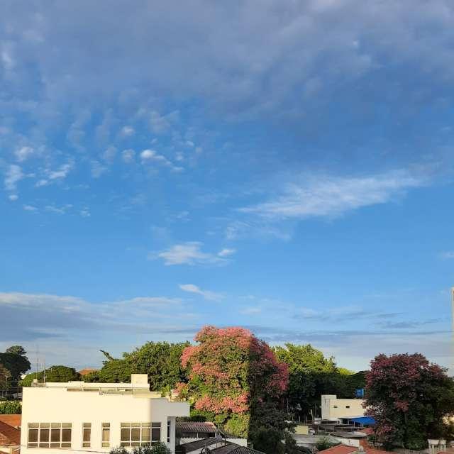 Paineira florida no céu azul