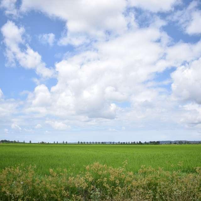 Green crop fields of Mondego