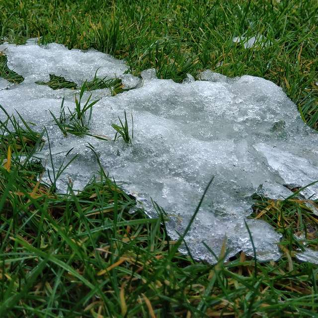 ice_grass