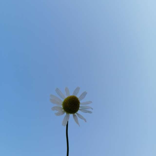 初夏の晴れた空