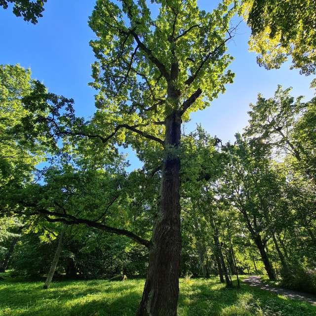 Tree in Kadriorg Park