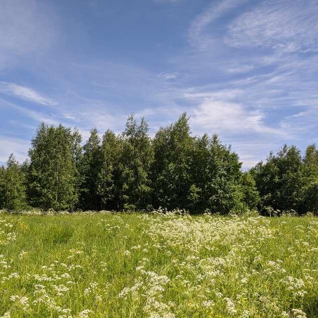 Цветочный лесной луг