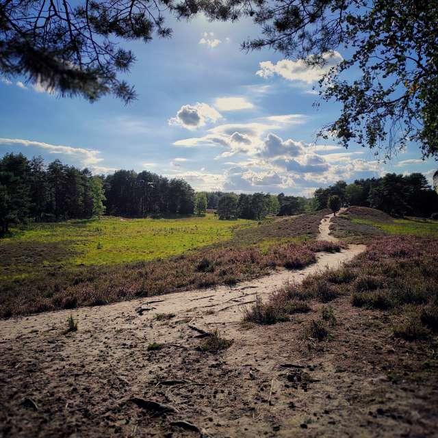 Gifhorner Heide