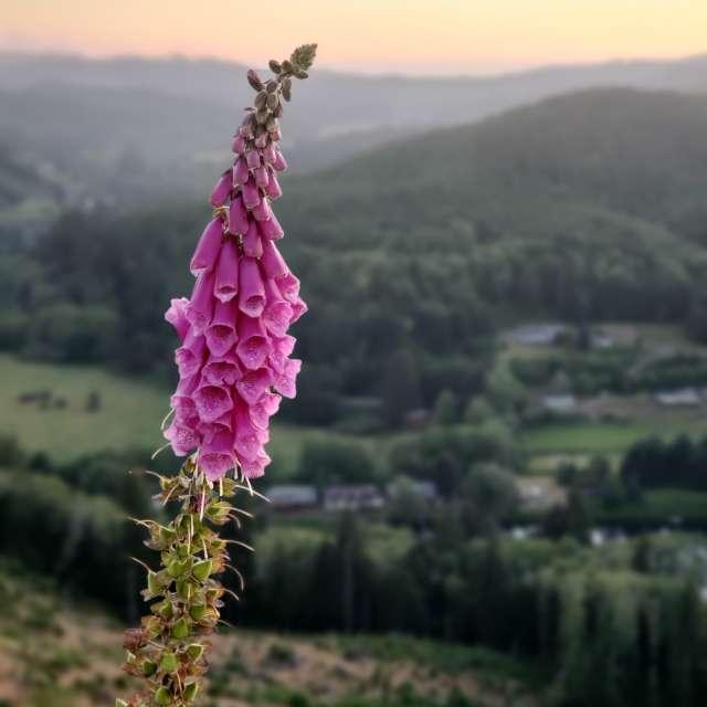 Flower during sunset