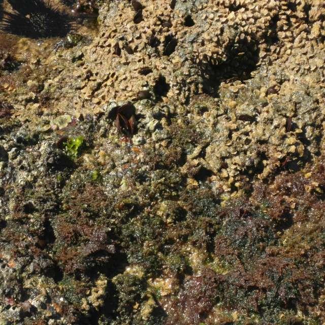 Pedras, ouriço e corais