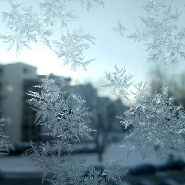 Frozen morning ❄