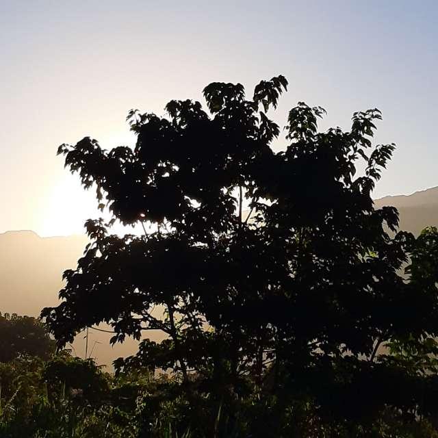 陽光照射樹梢間
