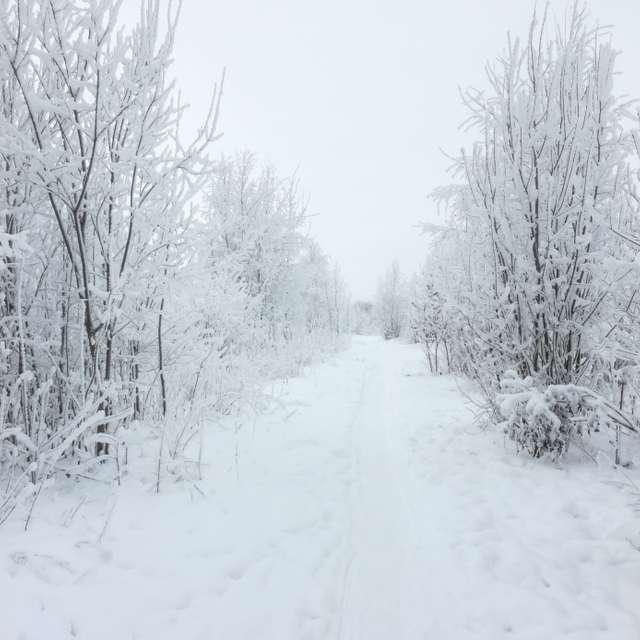 Дорога зимняя
