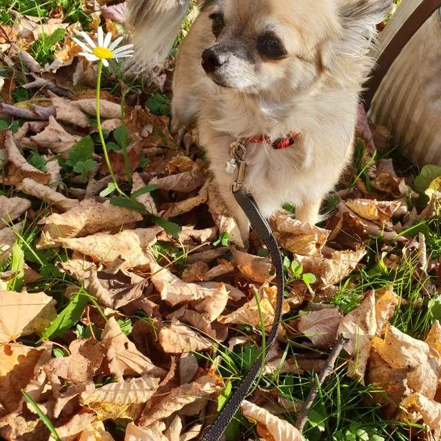 Das letzte Herbstblümchen