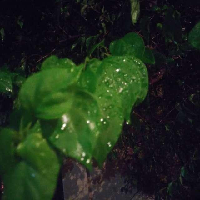Lluvia en mi jardín