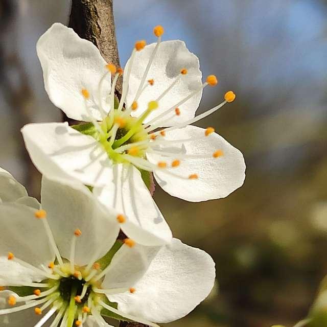 Primavera fiore