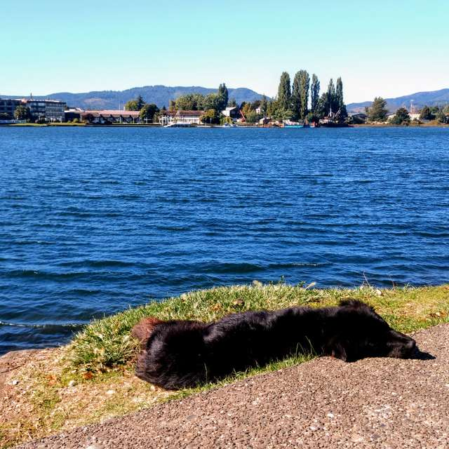 Dog sleeping next to river