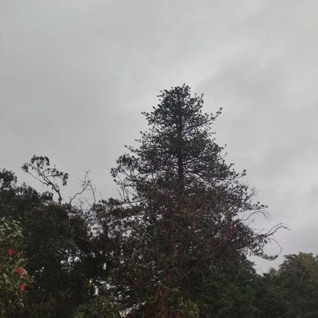 Jardim Botânico Antônio Borges