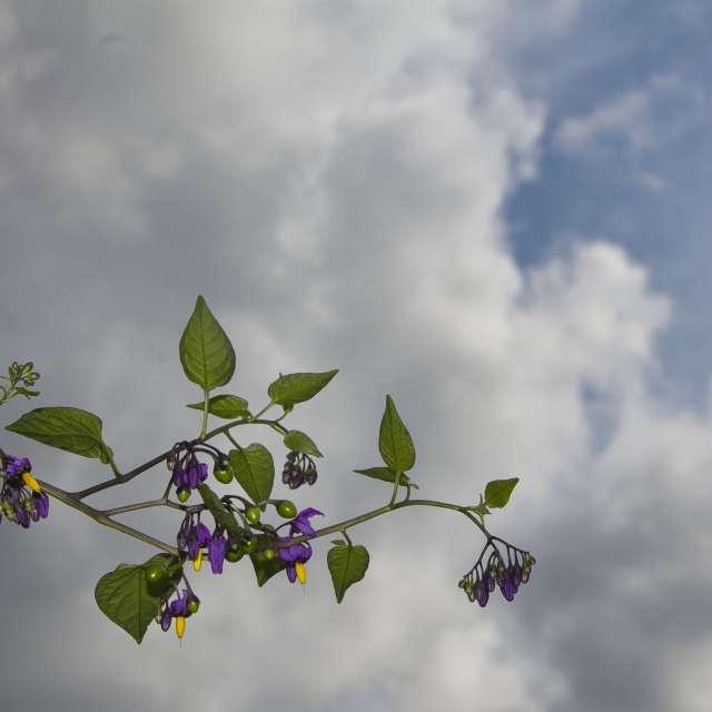 Purple & yellow flowers cloudy