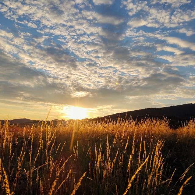 Grass in the golden sunset