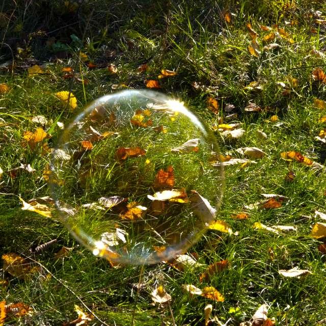 Мыльный пузырь в листве.