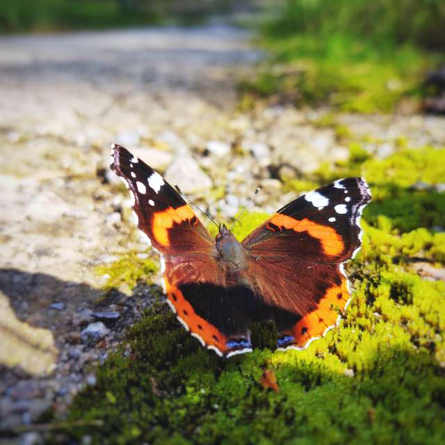 Colorful butterfly on the moss