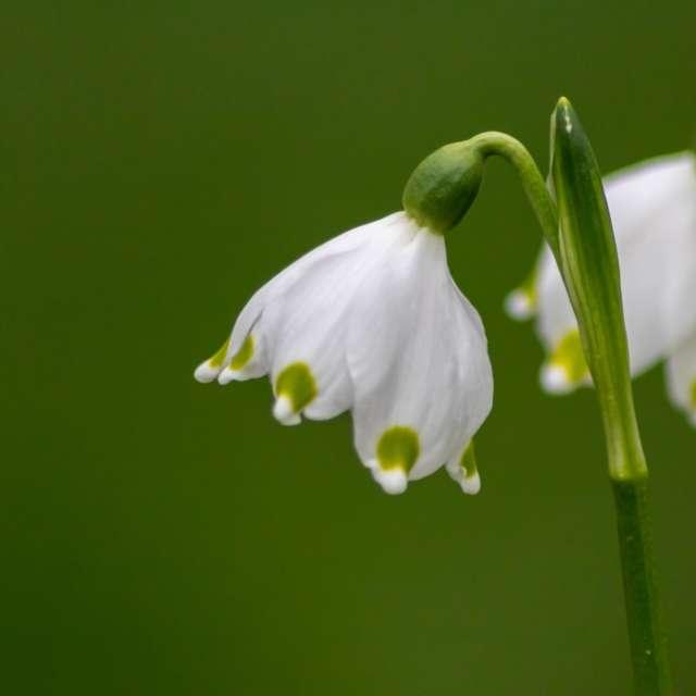 Beautiful spring snowflake