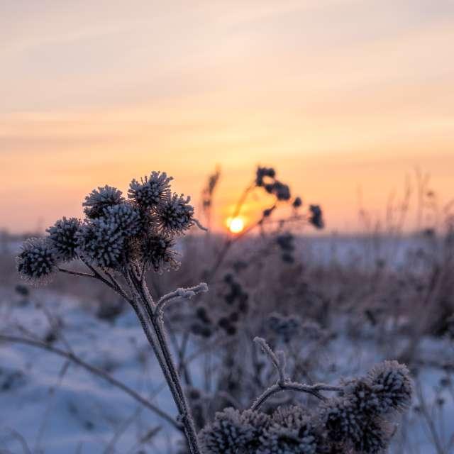 Russian Winter Vibe Landscape