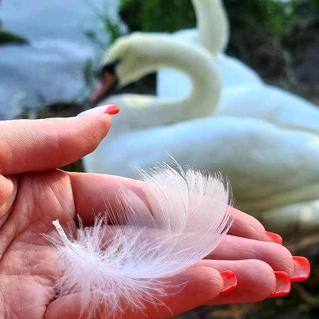 White🦢, pure and love❤✌