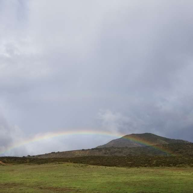 Rainbow in the meadow..