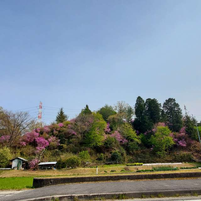山桜と田園