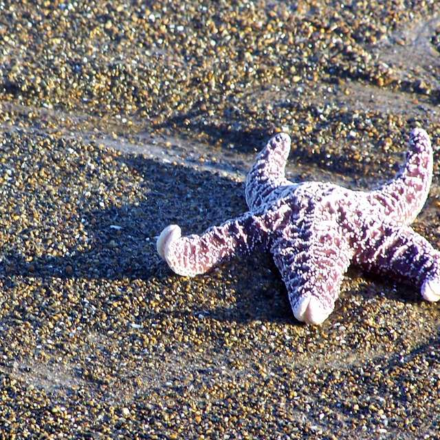 Star Fish On Shore